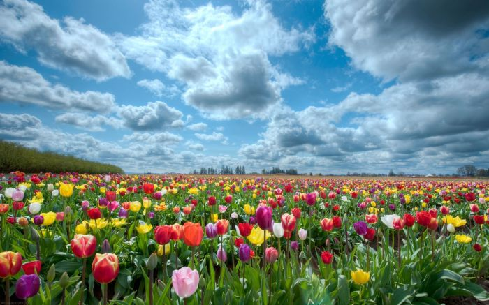 beauty-flower-nature-spring-flowers-field-wallpaper-1